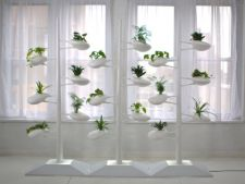 Hidroponia, metoda uimitoare de a creste plante de apartament fara pamant
