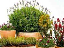 Trucuri simple, pentru a avea plante aromatice sanatoase si gustoase
