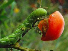 3 lucruri uimitoare pe care le fac plantele in secret