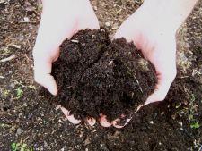 Ce trebuie sa faci pentru a spori fertilitatea solului din gradina