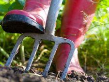Gradinaritul cu buget redus: ce poti face pentru a economisi bani cand ai o gradina