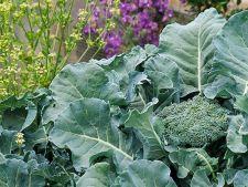 5 legume rezistente la frig, pe care le poti planta la final de iarna