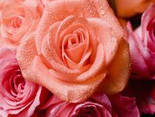 Flori care simbolizeaza iubirea. Iata ce trebuie sa daruiesti de Valentine's Day!