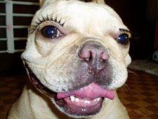 Genele false, ultima moda in materie de infrumusetare a animalelor de companie