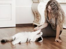 Vrei o pisica ideala pentru apartament? Iata ce optiuni ai!