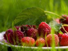 Cum sa fortezi fructele sa creasca mai repede