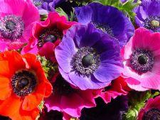5 flori care nu trebuie sa iti lipseasca din gradina la inceput de primavara