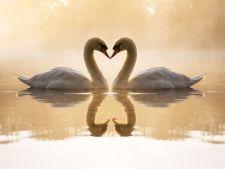 Cupluri de animale care se iubesc pe viata. Ce specii sunt asociate cu dragostea eterna?