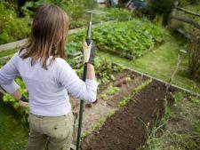 Primavara, anotimpul perfecte pentru cultivarea primei gradini! Iata cativa pasi esentiali