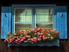Cutiile cu flori variate, o alternativa colorata la clasicele ghivece de pe pervaz