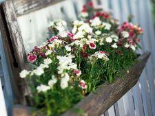 Infrumuseteaza peisajul de primavara al gradinii cu ghivece de flori viu colorate. Iata cateva idei