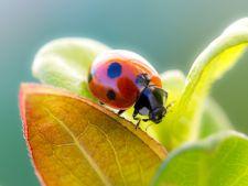 Insecte benefice pentru gradina ta
