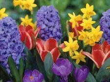 Ce flori sa oferi de 1 Martie femeilor dragi din viata ta