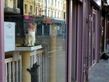 A fost inaugurata prima cafenea de pisici din Europa