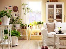 Moduri creative de folosire a plantelor de interior