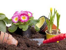 3 motive pentru care este bine sa folosesti ingrasamantul organic