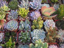Plantele suculente, ideale in gradina de vara: tot ce trebuie sa stii despre ele