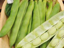 Bobul, o leguminoasa speciala usor de cultivat in gradina