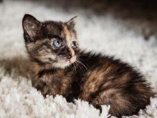 Pisica se trezeste frecvent noaptea? 4 cauze ale noptilor albe la pisici