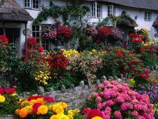 Tendinte gradina 2014: 5 plante perene iubitoare de soare