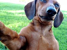 6 caini care au adoptat moda pozelor selfie