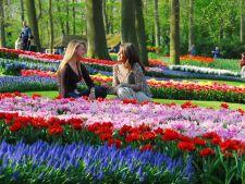4 destinatii unde poti admira florile in toata splendoarea lor in aceasta primavara