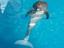 delfinul