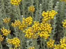 4 ierburi aromatice inedite pe care sa le cultivi in gradina