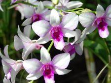 7 curiozitati despre delicatele orhidee