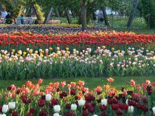 Britzer Garten din Berlin, o gradina spectaculoasa de vizitat in aceasta primavara