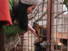 Scandalurile cainilor maidanezi au dus la interdictia adoptiilor in cazul mai multor ONG-uri
