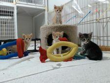 Site-ul care te lasa sa te joci cu pisici reale prin intermediul unui webcam