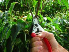 Ingrijirea tufelor de flori: o investitie minima pentru rezultate maxime!
