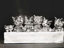 Fotografii vechi de un secol cu animale de companie surprinse in ipostaze umane