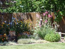 6 greseli comune in gradina si solutiile lor