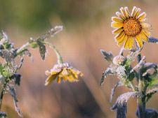 Cum sa readuci la viata plantele care par pierdute definitiv