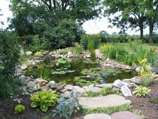 Sol umed in gradina ta? Iata ce plante rezista in aceste conditii!