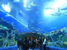 Record impresionant: chinezii au inaugurat cel mai mare acvariu din lume
