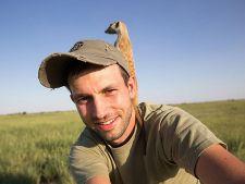 Fotograful napadit de suricate: Uite ce se intampla in salbaticie!