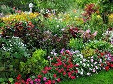 Pregateste-te sa intampini vara cu o gradina multicolora