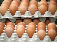 Iata cate oua poti cumpara cu 5 dolari in Romania si cate in Suedia!