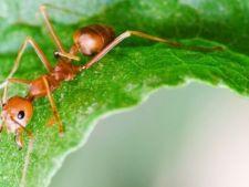 Cum scapi de invazia furnicilor in ghivece. Vezi ce trebuie sa faci!