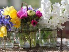 Cum sa muti gradina in casa. Bulbii florilor de primavara iti ofera solutia!