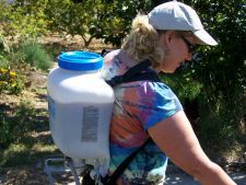 5 metode ecologice de combatere a daunatorilor din gradina. Iata cum scapi de ei!
