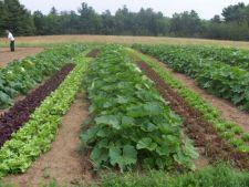 Avantajele unei rotatii eficiente a culturilor