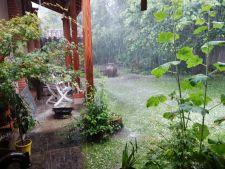 Cum sa salvezi plantele din gradina dupa ploile abundente
