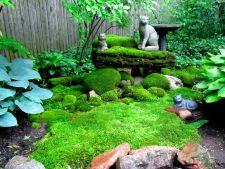 Gradina cu muschi de padure: alegerea perfecta pentru solurile umbrite si umede!