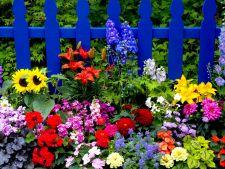 Florile care iti imbogatesc gradina pe timp de vara. Care sunt preferatele tale?
