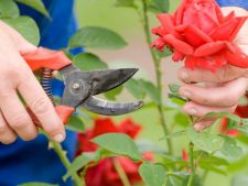 Cum sa iti pastrezi gradina inflorita: Invata sa ingrijesti plantele perene!