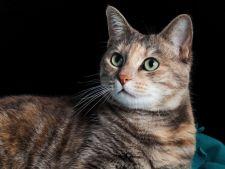 Cea mai batrana pisica din lume traieste cu kebab si produse fast food!